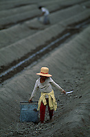 A young girl weary from bending over the mounds of sand, carries a tool and bucket of white asparagus that she is planting in the fields of San Vicente de Canete south of Lima.