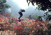Sculpture garden with Alstroemeria at UC Berkeley Botanic Garden