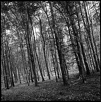 Woodland, Kennick, Devon | Black and White