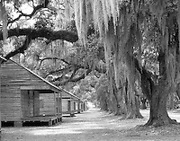 slave cabins with oak trees