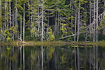 Forest reflection, Kitimat Ranges, British Columbia, Canada