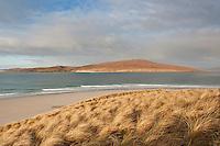 Dune grass, Luskentyre beach, Isle of Harris, Western Isles, Scotland