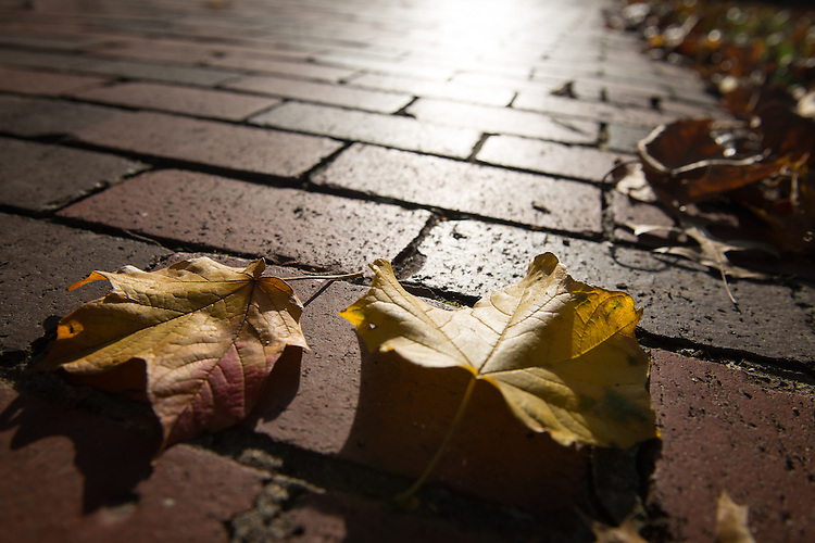 Autumn leaves cover the brick walkways on College Green on October 31, 2016.
