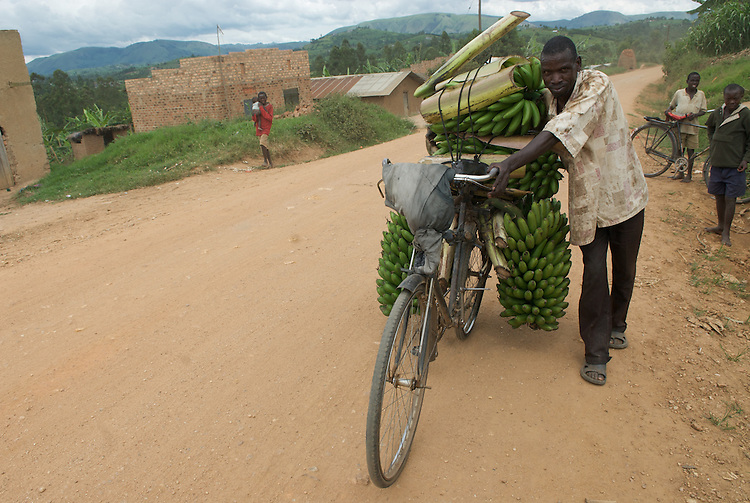 Matoke to market by bicycle