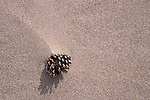 Pine cone and sand, Great Sand Dunes National Monument, Colorado