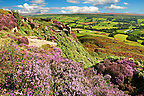 View of Danby Dale with heather flowering.  North Yorks National Park, North Yorkshire, England