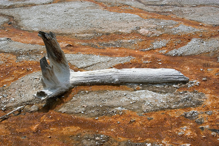 WY: Wyoming, Yellowstone National Park:.Dead tree in Lower Geyser Basin..Photo #: yellow1297..Photo copyright Lee Foster, 510/549-2202, lee@fostertravel.com, www.fostertravel.com..