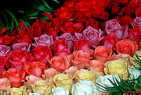 Roses mixture, stacked blossoms, variety of colors, white, yellow, peach, red, rose, mauve lavender