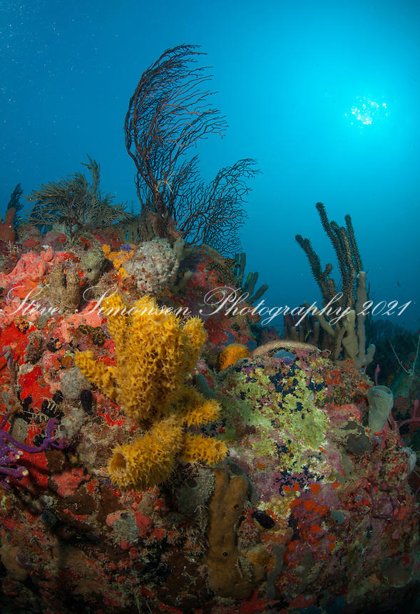 Reef at Bull Point<br /> Thatch Cay<br /> US Virgin Islands
