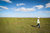 BP Bio Fuels 2012