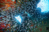 12 year old diver Noah  <br />