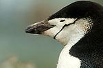 South Shetland Islands