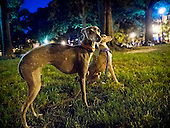noble beasts, Logan Circle, Washington, DC