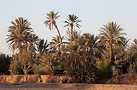 Skoura, Ouarzazate province, Souss-Massa-Draa, Morocco. Skoura is a fertile oasis lined with immense palm groves. Picture by Manuel Cohen
