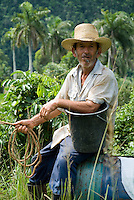 Farmer smoking a cigar while taking a break on his plough, Vinales Valley, Cuba