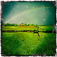 Rainbow Barb Wire, Hay Farm, Berea, Kentucky,