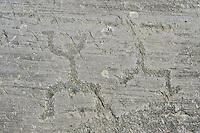 "Petroglyph, rock carving, of schematic figures in a so called ""prayer"" position. Carved by the ancient Camuni people in the iron age between 1000-1200 BC.  Rock 21, Foppi di Nadro, Riserva Naturale Incisioni Rupestri di Ceto, Cimbergo e Paspardo, Capo di Ponti, Valcamonica (Val Camonica), Lombardy plain, Italy"
