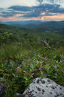 Blueberry bushes at sunset. Blue Ridge Parkway, North Carolina.