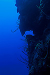 North Wall, Grand Cayman, No Name Wall at 100 Feet