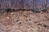 SOIL EROSION<br /> Clarkstown, NY<br /> Erosion is a result of natural forces such as rain, wind, and temperature cycles.  People battle erosion by planting grass and trees to form a strong root system or laying down netting to keep rock and soil from washing away.