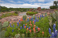Along County Road 304 in the Texas Hill Country, the Texas Bluebonnets and red paintbrush line the sides of the road.