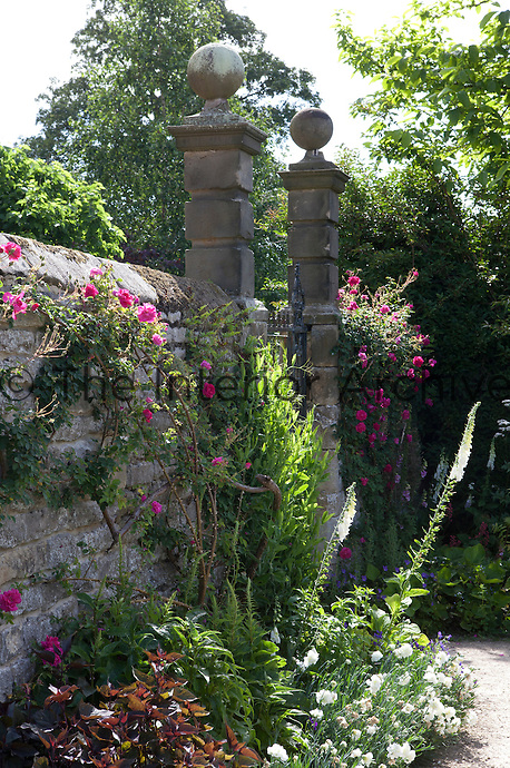 A rambling rose climbs over a stone wall at Haddon Hall