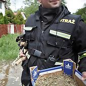 BORKI, POLAND, MAY 24, 2010:.Rescue workers evacuating a dog ..The latest chapter of disastrous floods in Poland has been opened yesterday, May 23, 2010, after Vistula river broke its banks and flooded over 25 villages causing evacualtion of most inhabitants..Photo by Piotr Malecki / Napo Images..BORKI, POLSKA, 24/05/2010:.Ewakuacja. Najnowszy akt straszliwych tegorocznych powodzi zostal rozpoczety wczoraj gdy Wisla przerwala waly na wysokosci wsi Swiniary kolo Plocka..Fot: Piotr Malecki / Napo Images ..