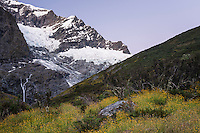 Alpenglow over Rob Roy Glacier in Matukituki Valley, Mount Aspiring National Park, Central Otago, World Heritage Area, New Zealand
