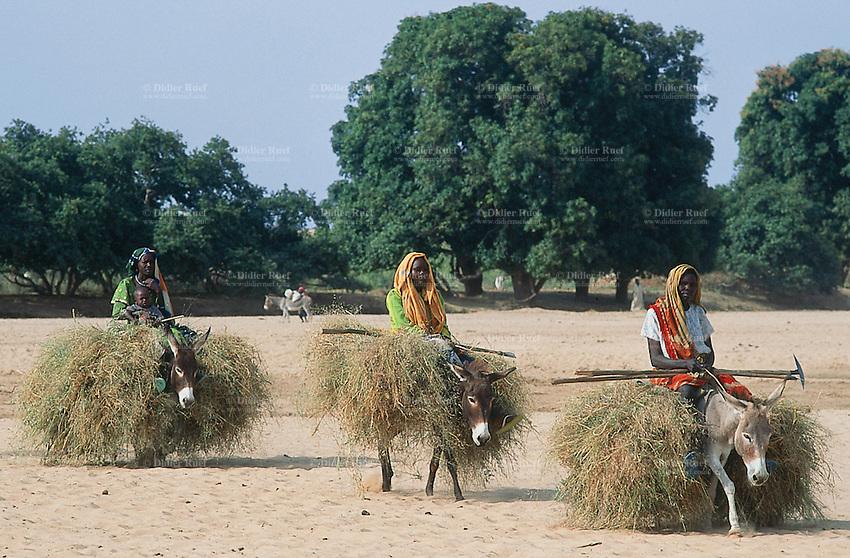 Sudan. West Darfur. Kerenek. Three women on their donkeys loaded with