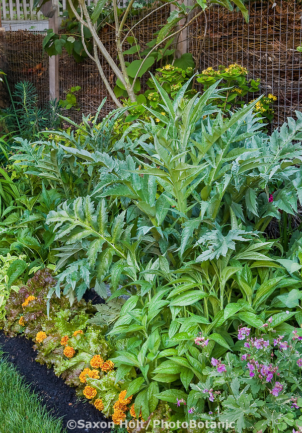 small space backyard garden mixed border with artichoke edible plants and flowers