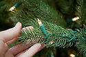 Close Up of hand holding holiday lights on artificial Christmas tree.