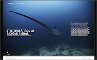 Article about Monad Shoal, Thresher sharks and the Thresher shark Research and Conservation Project. Published in Asian Diver.