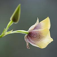 Orquídeas Interoceánicas