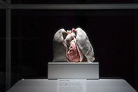 NO FEE PICTURES.1/2/12 Healthy lungs at the opening of The Human Body Exhibition—an all new exhibition featuring more than 200 full and partial real human body specimens, makes its world debut at The Ambassador Theatre this Spring. This incredible exhibition showcases carefully dissected specimens to provide a window into the miraculous way the body functions and gives visitors the opportunity to see exactly what lies beneath their skin. The Human Body Exhibition today Thursday 02 February, 2012 at The Ambassador Theatre for a limited engagement. Picture:Arthur Carron/Collins