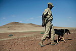 KUNENE, NAMIBIA - APRIL 26: Mannetje Ganaseb, age 42, a lead Rhino tracker for Save The Rhino trust, walks armed with his tracker dog on April 26, 2008 in Kunene, Namibia. He participated in a 2-week survey with a walking safari with camels and a crew through 155 miles of proposed parkland through the savanna at Etosha National park, through rocky badlands, across the world's oldest desert, the Namib and the blinding dunes and fogy cliffs at Skeleton Coast on the Atlantic Ocean. One of the missions was to track the black Rhinoceros who is now brought back from certain extinction, and more than one hundred fifty of them roam free in this remote area. (Photo by Per-Anders Pettersson).