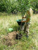 Kind, Junge pflanzt einen Obstbaum, Kirschbaum auf einer Wiese, Streuobstwiese, stellt den Baum mit seinem Wurzelballen in das Pflanzloch