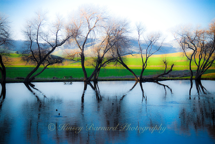 &quot;MAGICAL POND&quot;<br /> <br /> Evening falls on the pond at Rouge et Noir Cheese Factory in Marin County California<br /> <br /> <br /> (1) 42 X 30 canvas print (SOLD)<br /> (1) 36 X 24 canvas print $3,200 <br /> <br /> 17 x 12.5 signed paper print<br /> 1/50 $95.00 ORIGINAL 24 X 36 GALLERY WRAPPED CANVAS SIGNED BY THE ARTIST $2,500. CONTACT FOR AVAILABILITY.