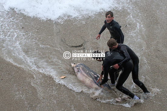 A dead dolphin is pulled from rough seas by three teenagers on The Headland in Newquay, Cornwall.