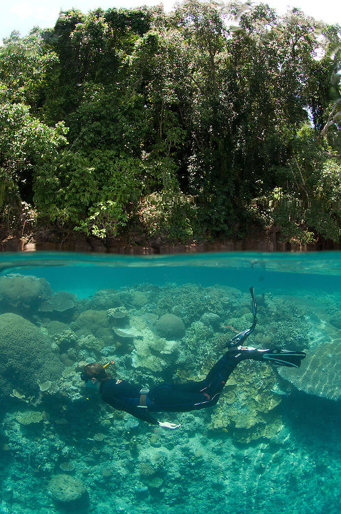Split level shot of snorkellers at Restorf Island, Kimbe Bay