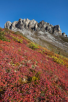 Blueberry and autumn tundra at the base of Snowden mountain, Brooks range mountains, arctic, Alaska.