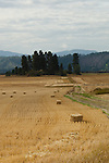 Bales of straw in the farm fields in northern Idaho