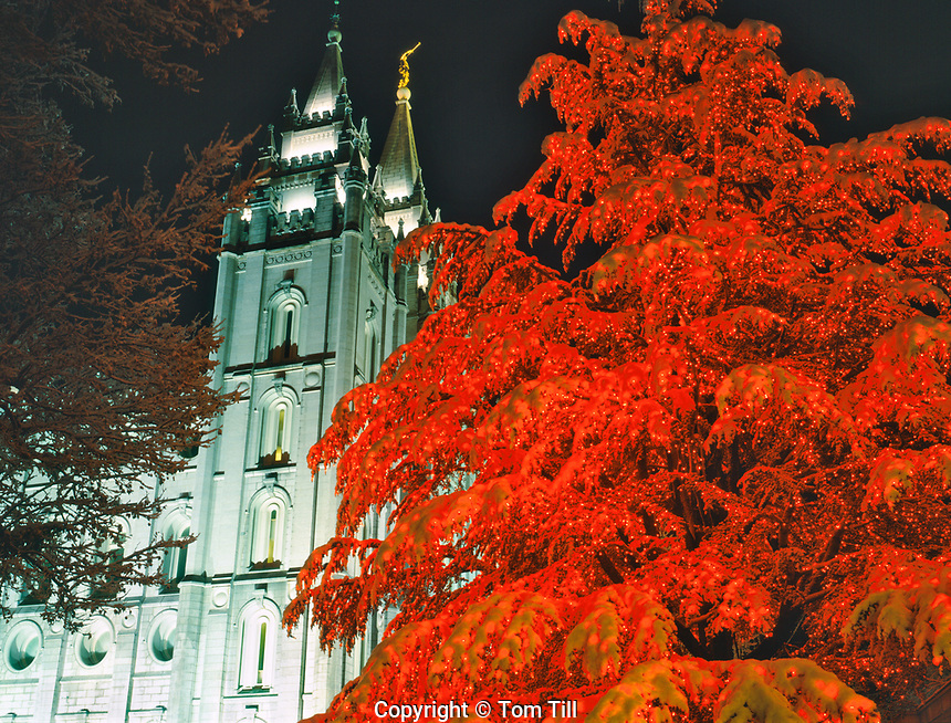 Christmas tree at Temple Square, Salt Lake City, Utah   LDS Temple   Dec. 2008
