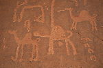 Petroglyphs in Wadi Rum left by camel traders