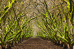 Overgrown orchard, Oregon, USA