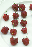 Raspberries Autumn Bliss on white background, individual berry fruit with stems, Rubus idaeus