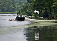 Boater coming up one of the canals used in the filming of US Marshals. Egret gets spooked and fly's away. Reel Foot lake near Tiptonville, TN. Reel Foot Lake
