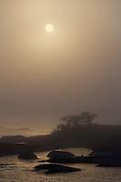 Landscape in sea fog.<br /> Kallsk&auml;r, Stockholm Archipelago, Sweden