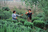 October 1984. Si Chuan Province, Mr. and Mrs. Huang received a government diploma thanking them for their inniciative. Thir first business is a nursery with decorative plants. The second business is a manufacture of mosaic tiles very much needed in the new construction. These new entrepreneurs are buying refrigerators, TVs, washing machines, made in China.