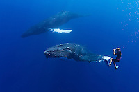Wildlife photographer James D. Watt photographing humpback whales, Megaptera novaeangliae, Pacific Ocean.