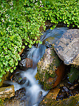 Fresh, Pure Water From a Natural Spring Below the Chinese Wall in the Bob Marshall Wilderness in Montana.